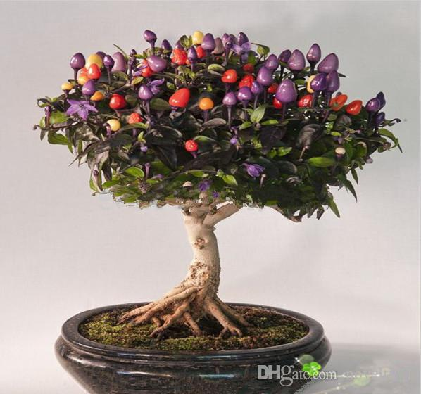 Potted vegetable seeds colored colorful 100 chili peppers seeds edible ornamental bonsai plant garden DIY free shipping