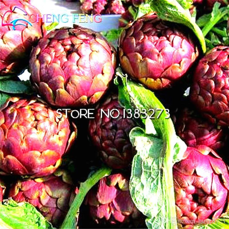 The Artichoke Seeds 10 Particles Artichokes Vegetable Seeds Heirloom Healthy Organic Green Plants For Farm * Globe Free Shipping