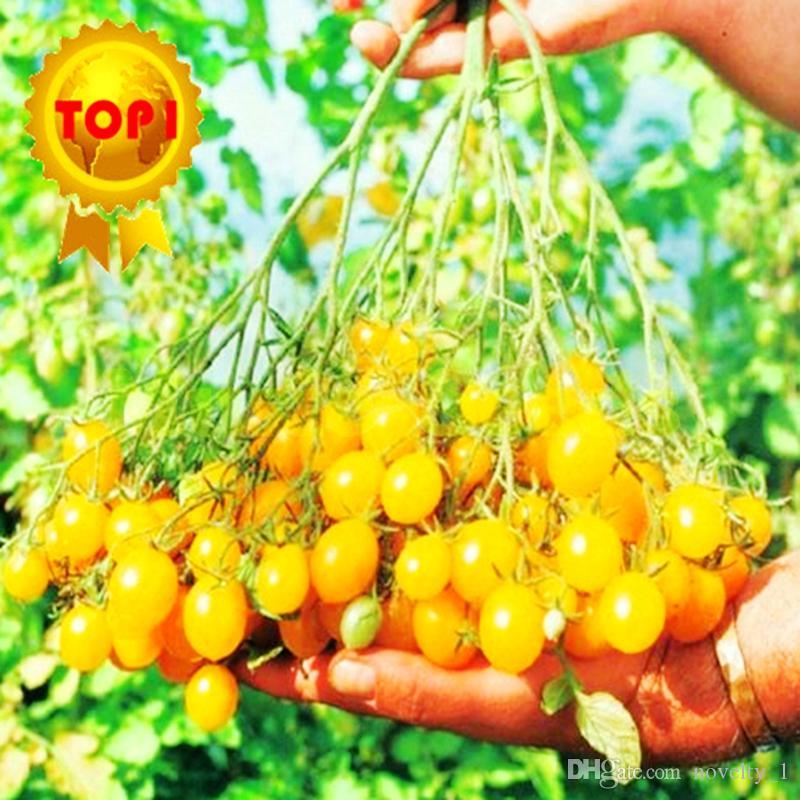 1 sac = vente chaude 300 pcs doux Graines De Tomate cerise mini jaune légumes semences graines de fruits bonsaï plantes en pot