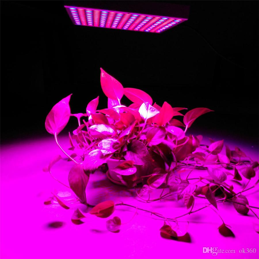 50W 3528SMD Hydroponische Pflanze Wachsen Licht Pflanze Blume Gemüse Gewächshaus Garten 225LED RotBlau Zimmerpflanze Wachsen Licht