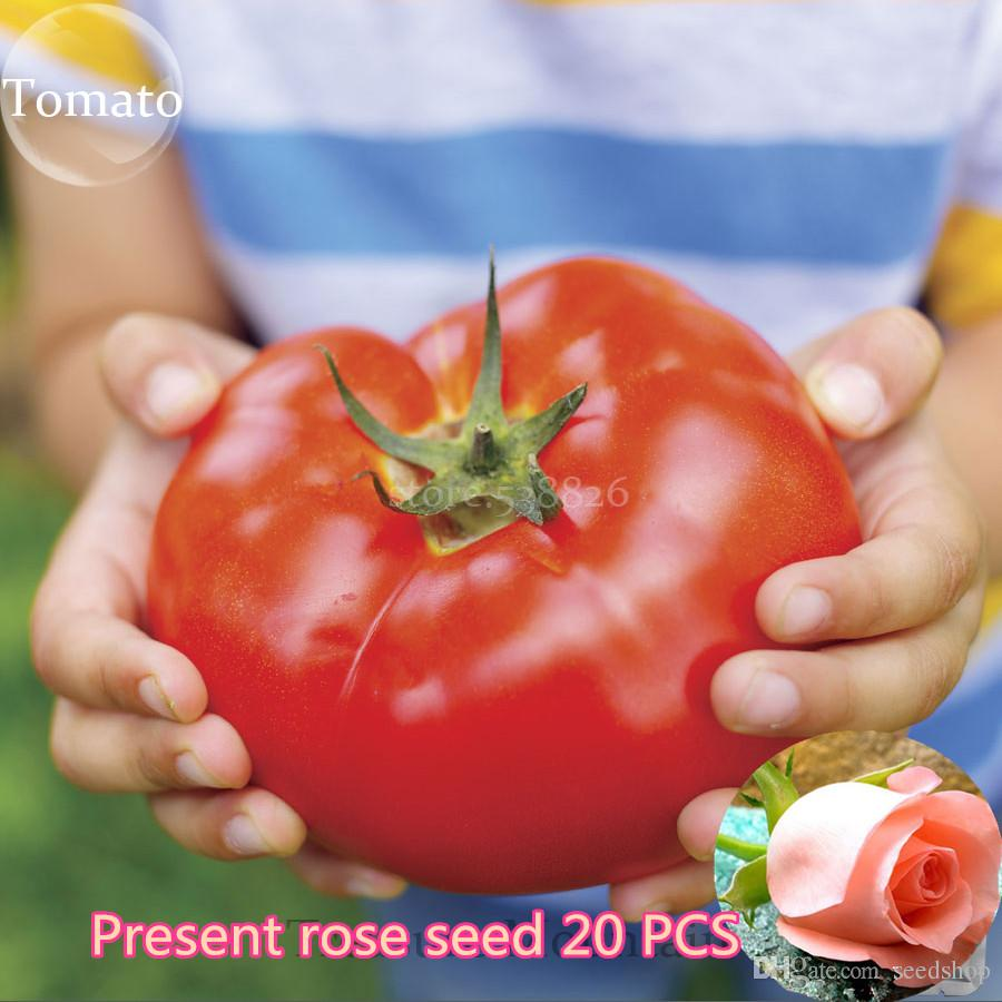 100 pcs Super Rare Red Giant Competition Russian Heirloom Tyazeloves Tomato seeds vegetable seeds for garden plant NO-GMO