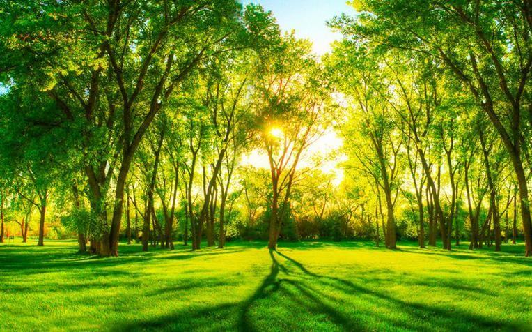 Acheter Fonds D Ecran Pour Chambre Personnalisee Fond D Ecran 3d Salon Vert Foret Paysage Photo Gratuit Papier Peint De 23 11 Du Yeyueman8888