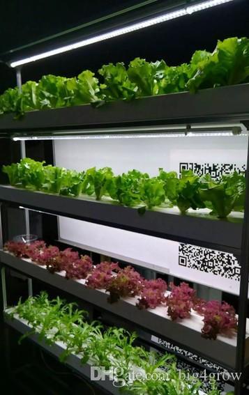 New full spectrum white plant factory led grow light 1200mm T8 led grow tube light with daisy chain