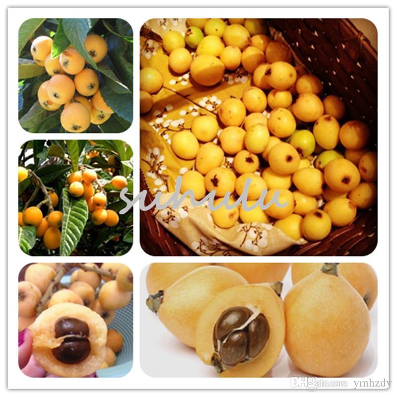 Fruits chinois graines de pipa pour la maison de jardin plantes bio fruits et légumes sucrés bonsaï plantes bonsaï plantes pour la maison jardin