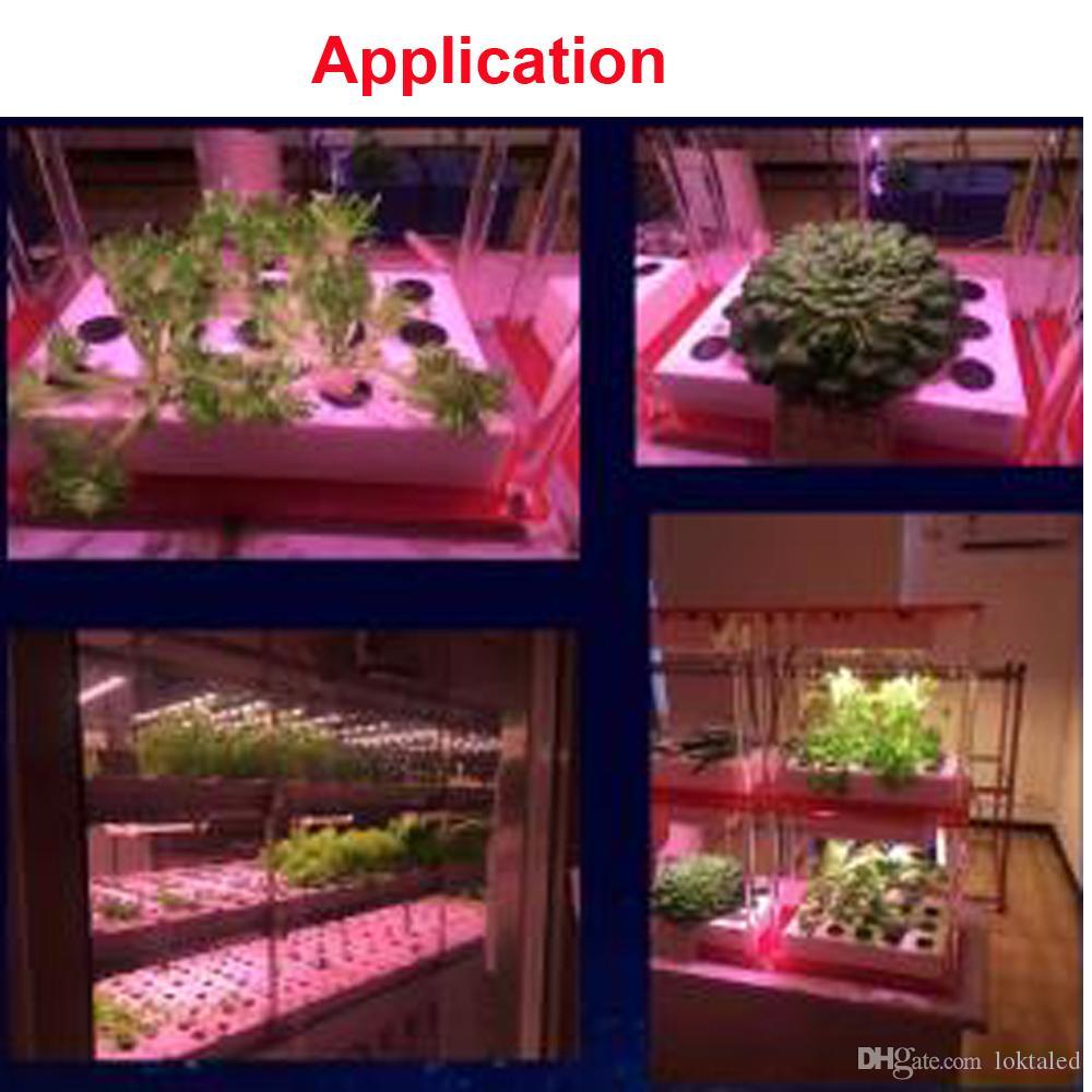 10PCS / LOT أدى النمو ضوء رقاقة 30W 50W 80W كامل الطيف للالزراعة المائية الخرز الاحتباس الحراري قطعة خبز لحديقة ديي زراعة في الأماكن المغلقة