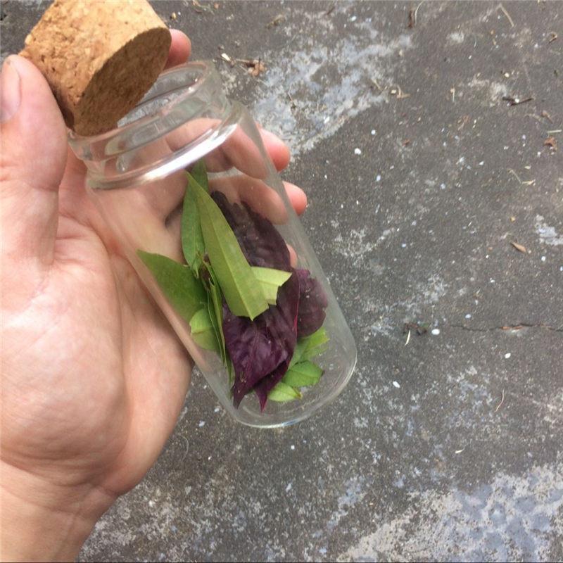 230ml Big Glass Saffron Storage Bottles Corks Food Grade Jars For Saffron Transparent Eco-Friendly Bottles2
