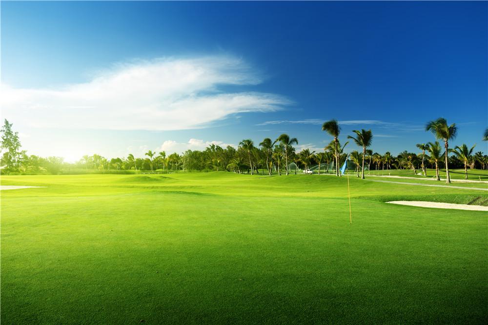 맑은 푸른 하늘 흰 구름 골프 코스 사진 배경 녹색 잔디 바닥 인쇄 나무, 자연 경관 사진 촬영 배경 화면