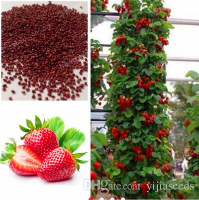 50pcs/bag strawberry seeds giant strawberry Organic fruit seeds vegetables Non-GMO bonsai pot for home garden plant seeds