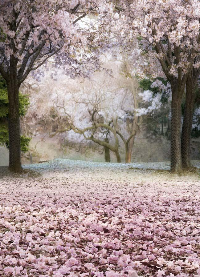2020 5x7ft Vinyl Spring Pink Sakura Tree Floral Photo Backdrop Background From Zhyd73 17 96 Dhgate Com