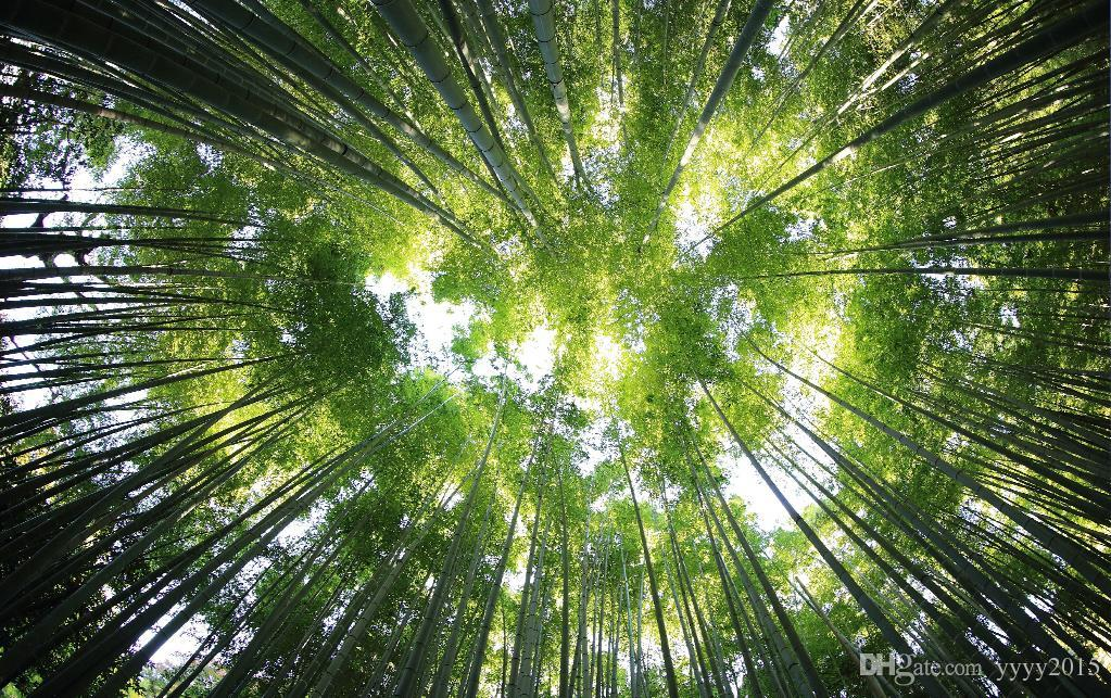 Photo Wallpaper Nature Jungle Forest Fresh Looking Sky Sky Zen Wall Mural Background Wallpaper Bamboo Screensaver Wallpapers Screensavers And