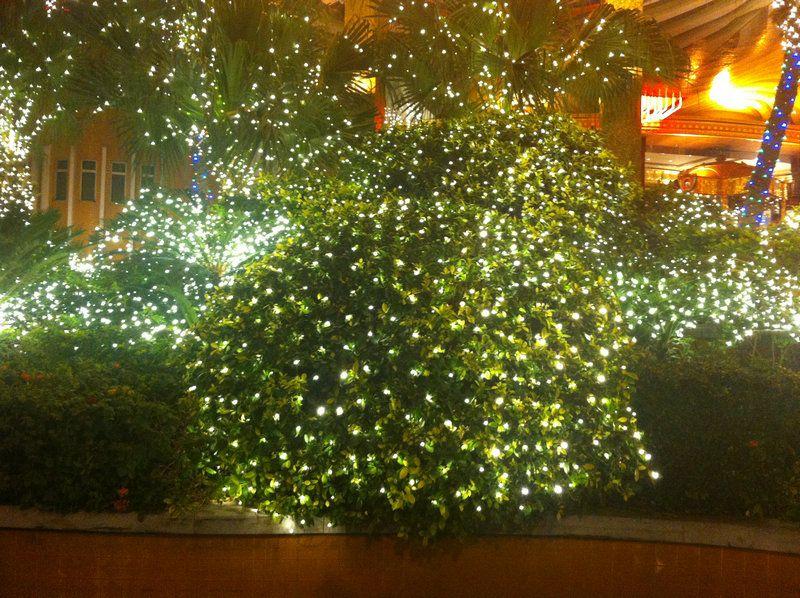 Christmas Bush Lights.2mx3m 200led Curtain Net Lights Led Web Light Mesh Fairy String Lights F Christmas Xmas Wedding Party Tree Bush Decor Outdoor Led String Lights
