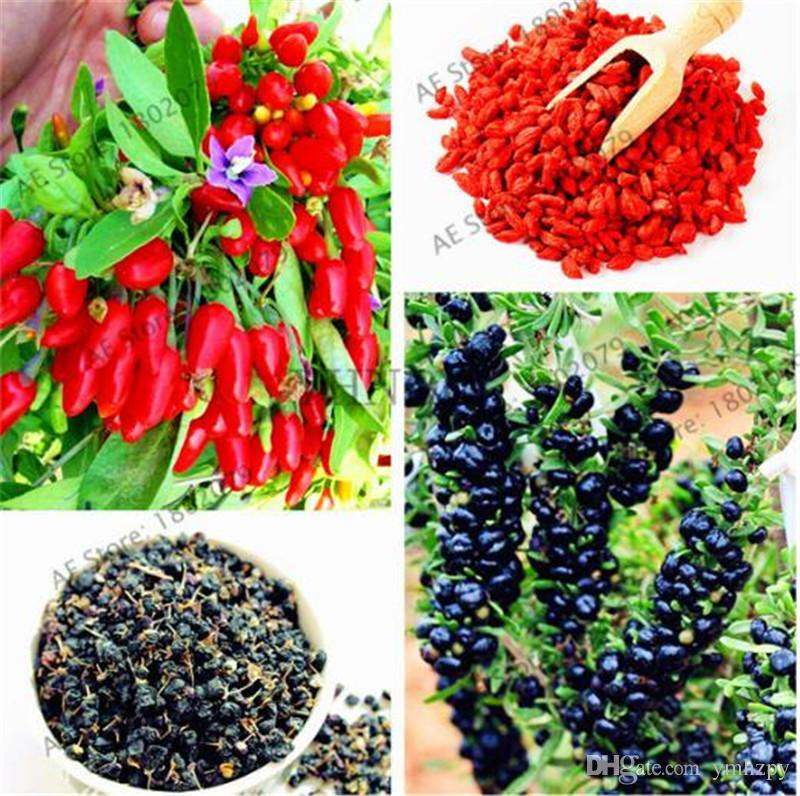 2020 Bag Heirloom Chinese Wolfberry Seeds Organic Lycium Fruit