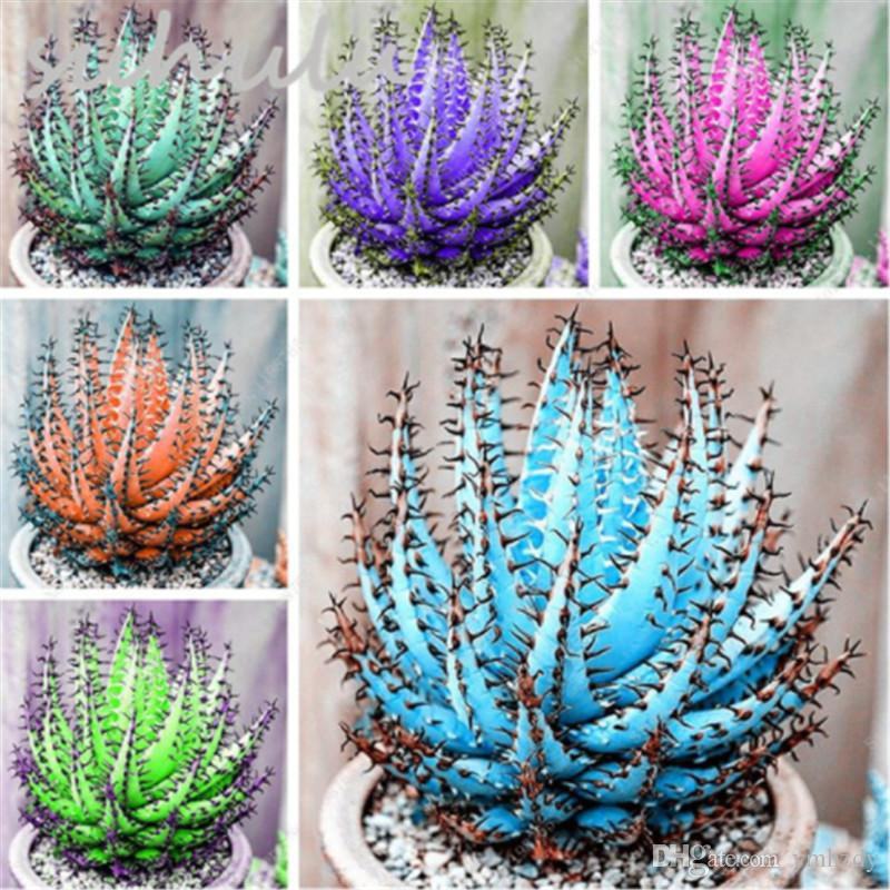 50 semillas / Bolso colorido de semillas de cactus de Aloe mezcla exótica flor de cactus, suculento de Aloe Vera de semillas comestibles Uso de belleza cosmética hierba Mini Office Bonsai