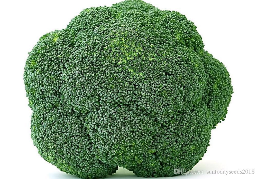 Suntoday china Brócoli semillas de hortalizas Calabrese verde que brota de la herencia asiática jardín de plantas no-GMO Híbridos semillas orgánicas frescas