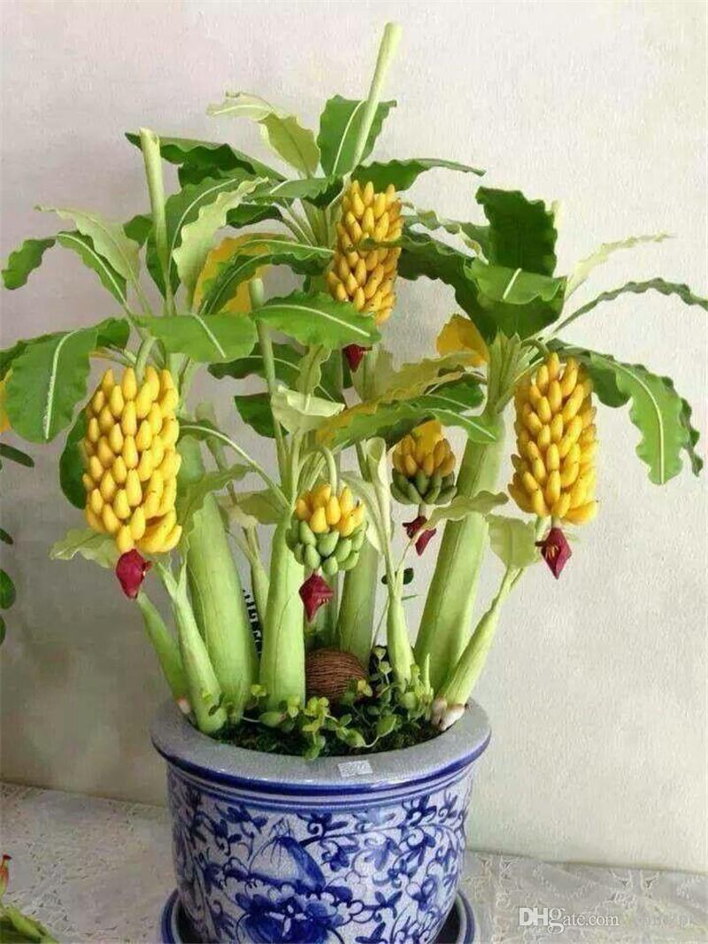 20 Stücke Mini Bananensamen Bonsai Baum Outdoor Mehrjährige Interessante Pflanzen Milch Geschmack Köstliche Obst Samen Für Hausgarten