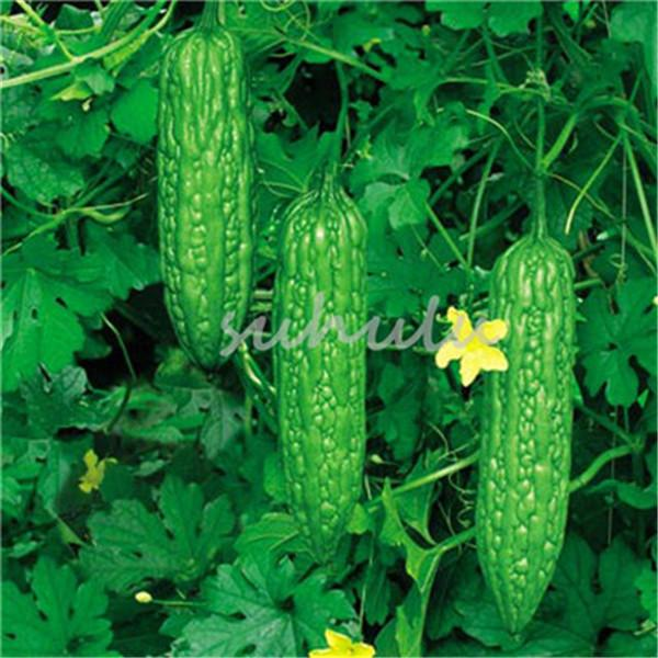 Rare  Momordica  Vegetable  2 seeds UK SELLER