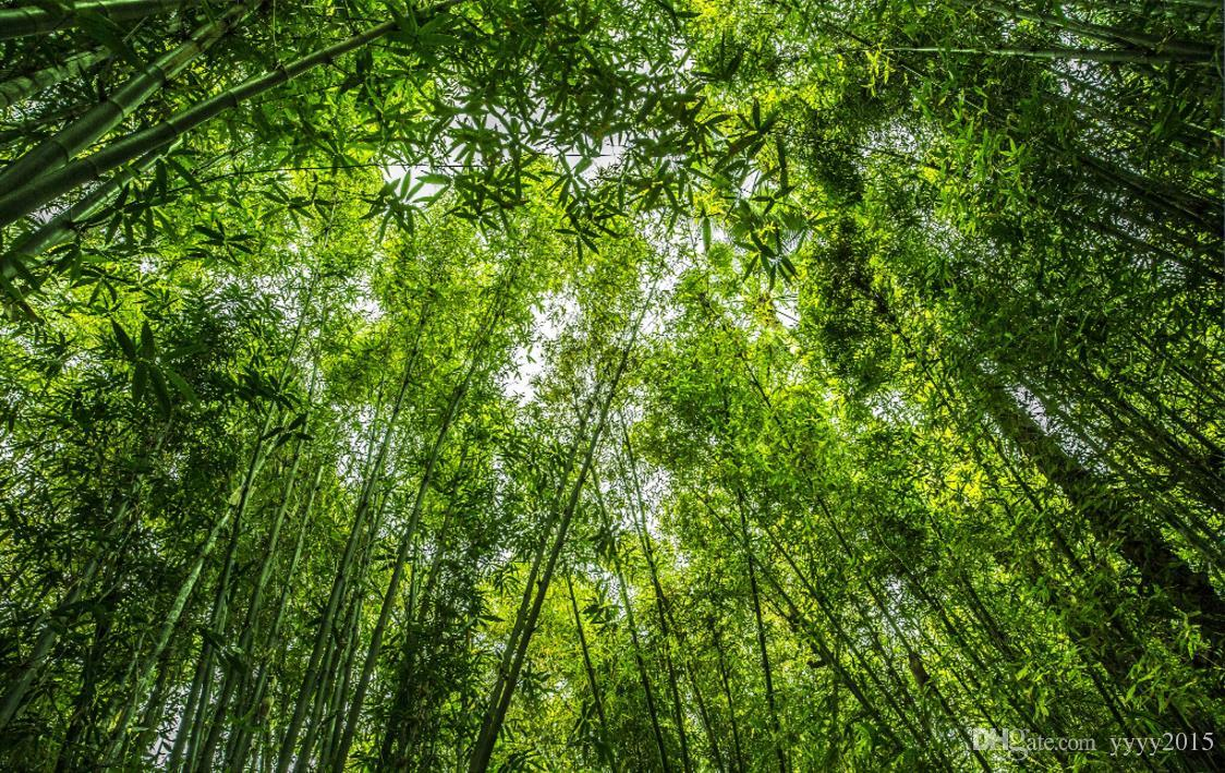 Nature Scenery Wall Paper Jungle Forest Looking Up Sky Top Ceiling Fresco Ceiling Wall Background Wallpaper Bamboo Free Wallpapers Photos Free