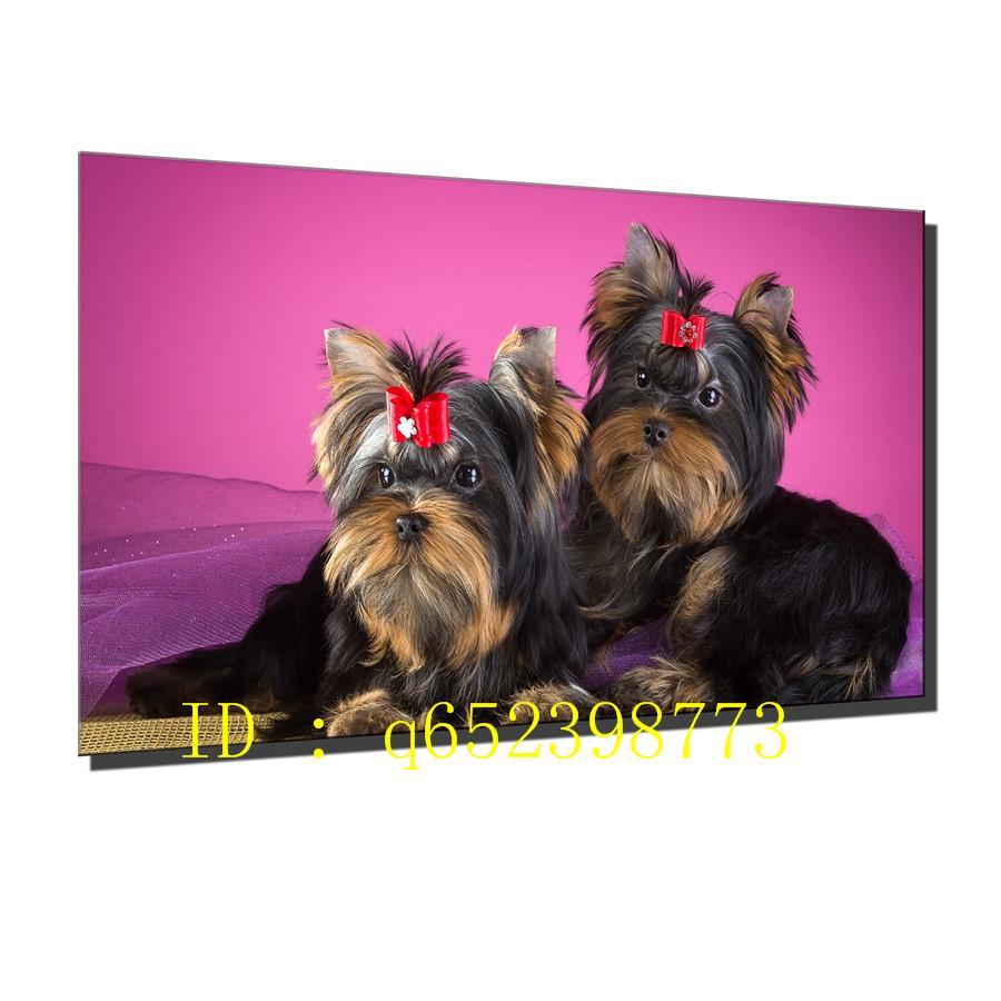Yorkshire Terrier Perros Cachorros HD Impresión en lienzo Nueva decoración casera Arte Pintura / Sin marco / Enmarcado
