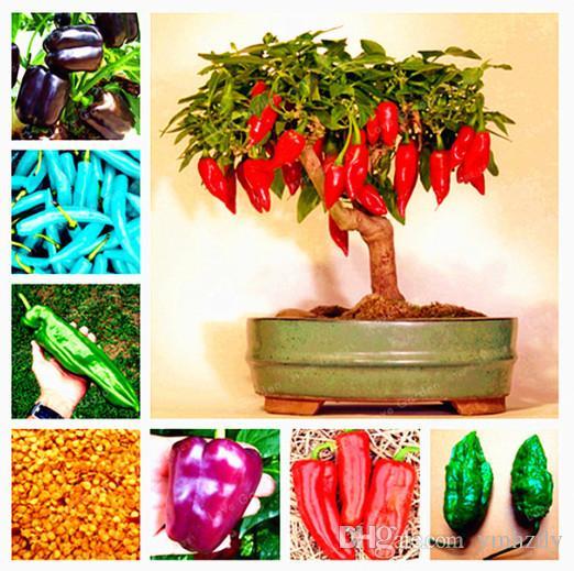200 Pcs Graines De Piment Hot Piment Légumes Bricolage Plantes En Pot Intérieur Extérieur Paprika Pour La Maison Jardin Taux De Germination De 95%