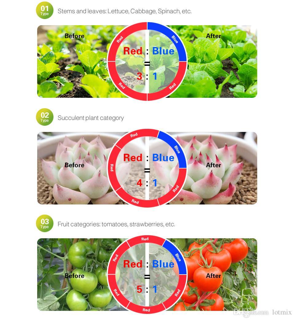 DC12V LED Coltiva la luce 5M LED Strip light 5050 SMD LED Fiore crescita delle piante lampade per la coltivazione in serra di piante idroponiche