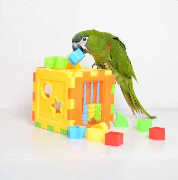 Pet Birds Parrot Toy Bird Product Supplies Puzzle Toy For Budgie Parakeet Cockatiel Parrot Educational Accessories D415