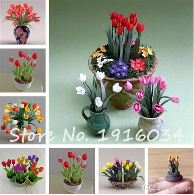 100 Pcs Mini Tulip Seeds,Rare Color Tulip Flower Seeds for Home Garden Bonsai Potted Plants Perennial Indoor Flower Pot Decor