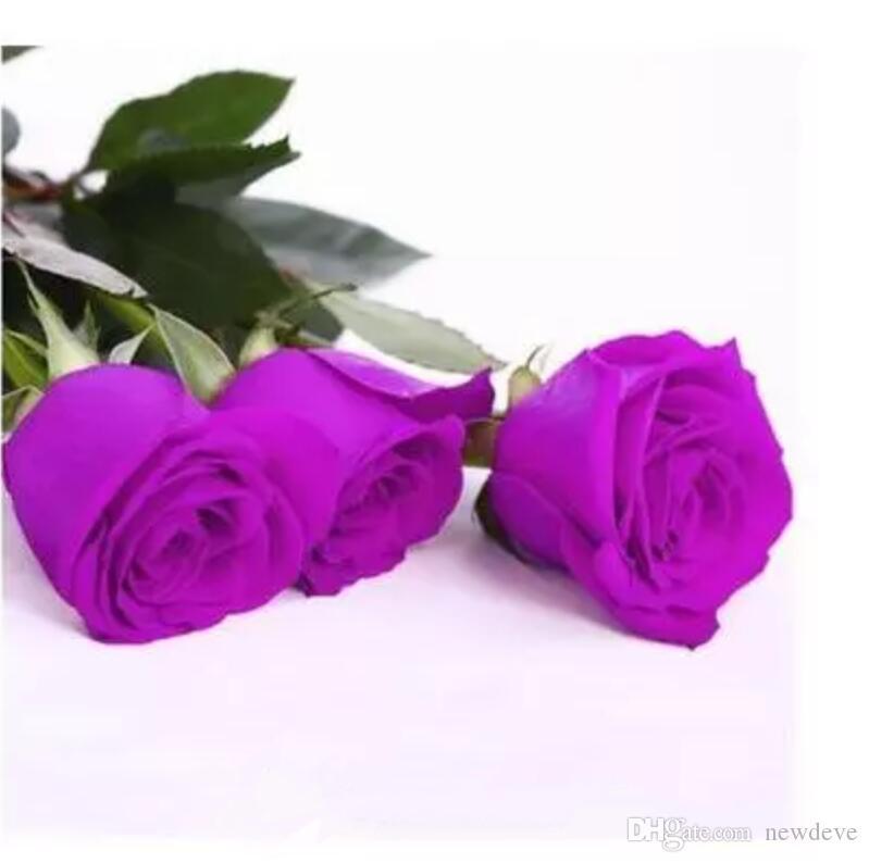 2019 ultimo arrivo semi di fiori semi di rosa viola 100 pezzi semi per confezione piante da giardino in vendita calda 10 colori spedizione gratuita