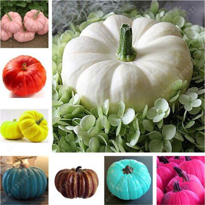 30 PC 자이언트 호박 씨앗, 큰 호박 - 호박 씨앗, 분재 유기 과일 야채 씨앗, 혼합 색상, 홈 가든에 대한 식물