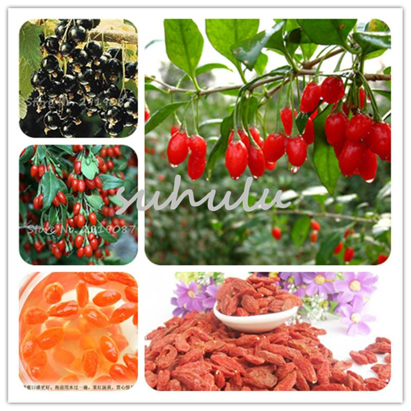 2020 50 Seeds Himalayan Goji Berry Seeds Wolfberry Most Popular