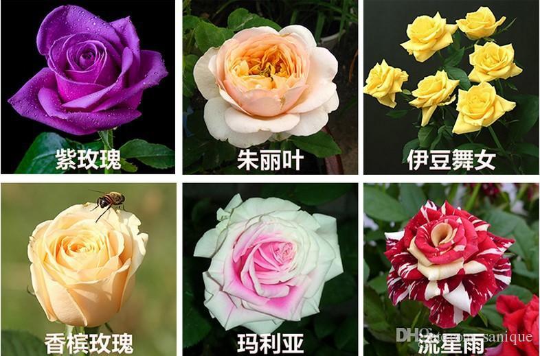 New Varieties 10 Colors Rose Flower Seeds 50 Seeds Per Package Flower Seeds For Home Garden Plants