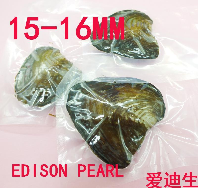 Venta al por mayor 3PCS / lot Monster oyster 15-16MM Envasado al vacío Edison Pearl Oyster, TENGA One Edison Pearl en Every Oyster,