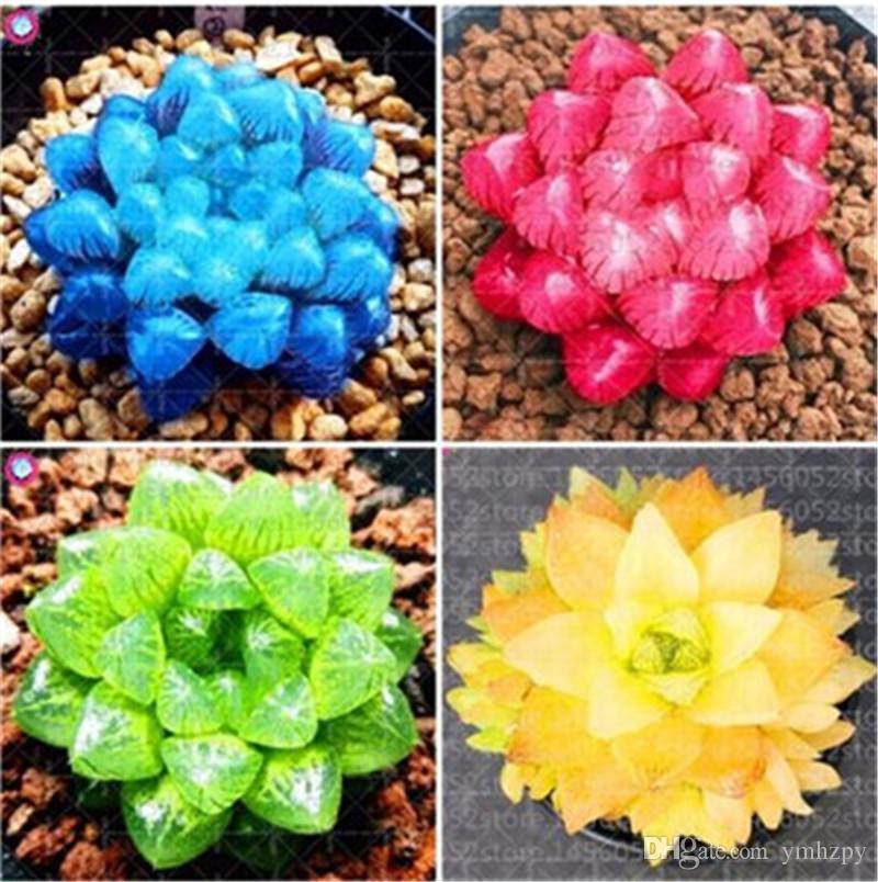 Bonsai Blumen Indoor Sukkulenten Pflanze 100 Teile / beutel Mix Lithops Samen Seltene Sukkulenten Samen Living Stone Bonsai Mini Gartenpflanze