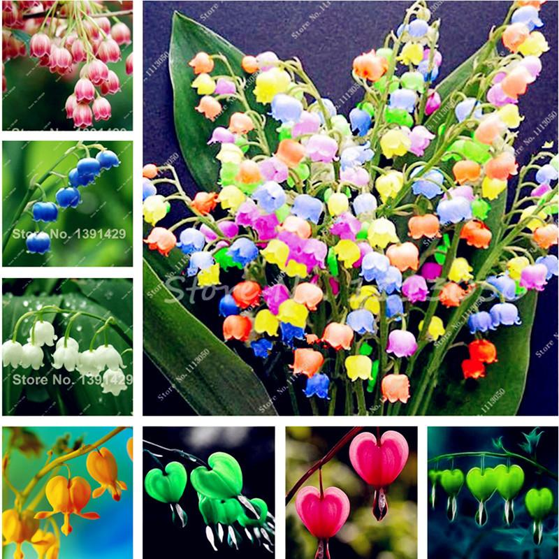 Sale 120 Pcs Lily of the Valley Flower Seeds , Bell Orchid Seeds,Rich Aroma ,Bonsai Balcony Flower for Home Planting DIY Potted Plants