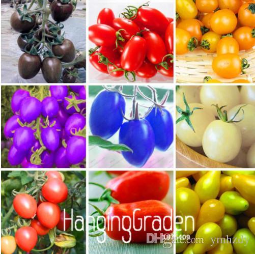Nouvelles graines fraîches 7 sortes de graines de tomates cerises Fruits délicieux Légumes en graines Légumes en pot Bonsaï Tomates en plantes en pot Graines 200 PCS / sac
