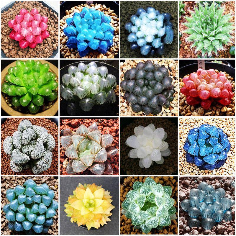 US-100Pcs Potted Succulents Fleshy Plants Seeds Lithops Pseudotruncatella Seeds