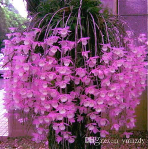 Envío Gratis 200 Unids Semillas Mixtas de Dendrobium En Maceta Hermosas Semillas de Flores Variedad Completa La Tasa de Florecimiento 95% Sementas