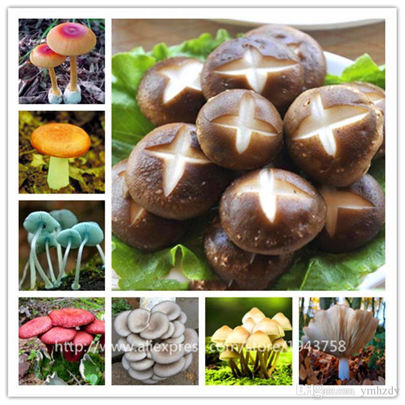 Mushroom Bonsai Succulent Plants Health Vegetable Garden NEW 2019 100 PCS Seeds