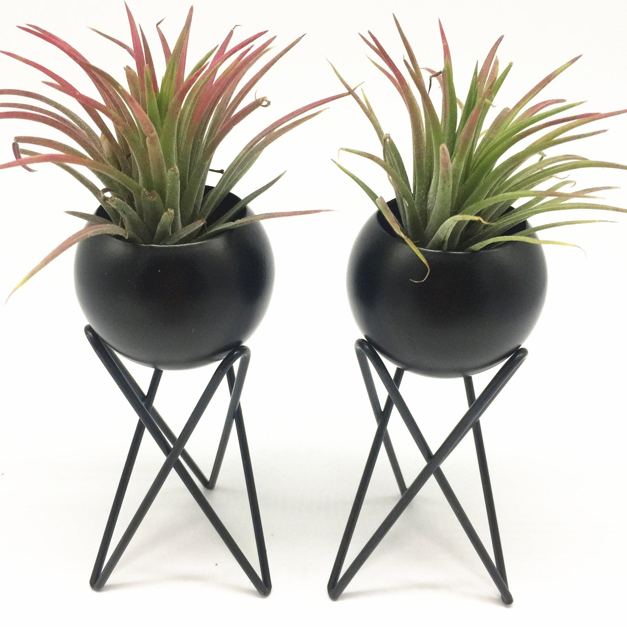 2021 Tabletop Standing Air Plant Holder Air Plant Stand Air Plant Container Tillandsia Holder Tillandsia Stand From Txbiao 20 11 Dhgate Com