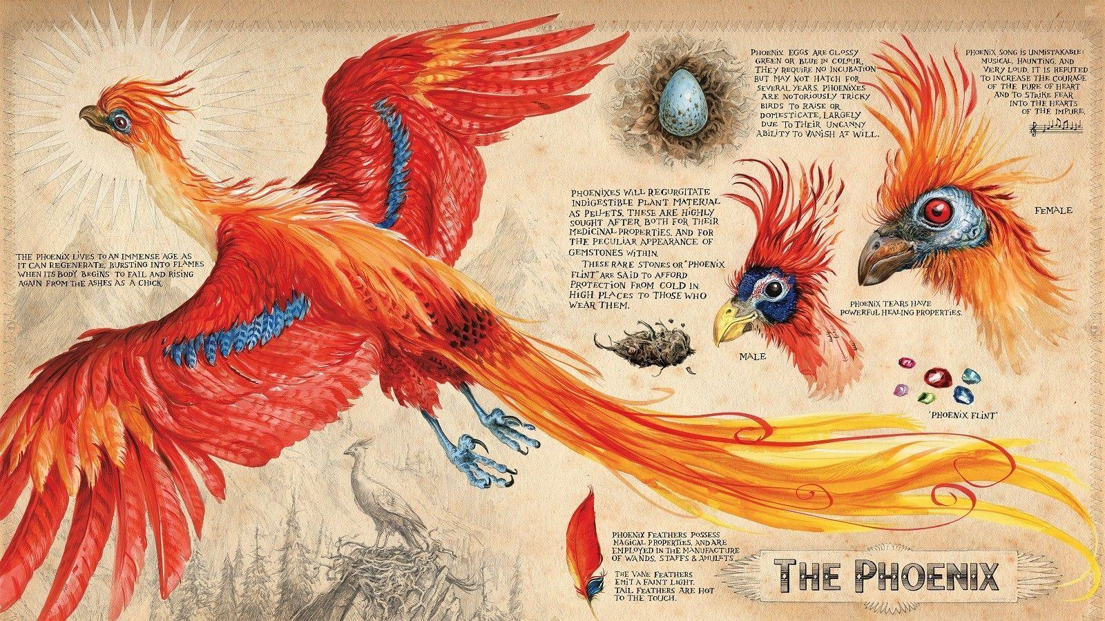 2021 The Phoenix Bird Art Silk Poster 20x30 24x36 24x43 From Chuy8988 10 93 Dhgate Com