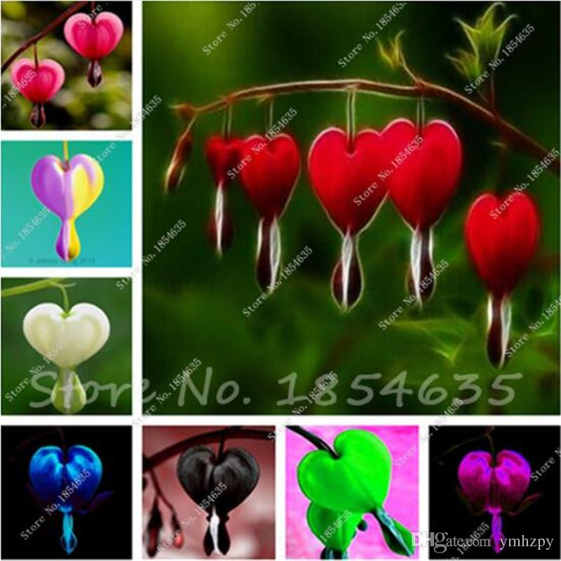 50 Stück Maiglöckchen Blumensamen, Bell Orchid Seed, reiches Aroma, Bonsai Flower Rhizome, Zimmerpflanze aussehen wie Liebe Herz