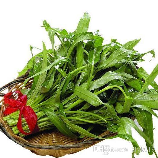 2017 neue Wasser Spinat Samen, organische Sumpf Grün Gemüsesamen 30 partikel / tasche