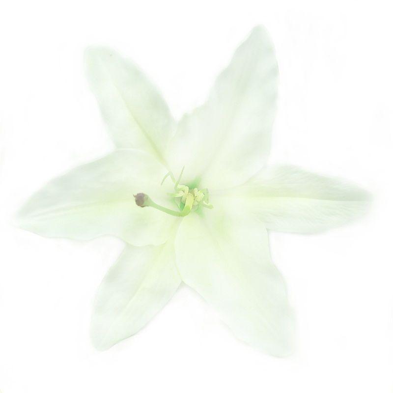 30 unids 17 cm Gran Lirio de Seda Artificial Cabeza de Flor Para La Boda Decoración de Coche Diy Garland Floristería Decorativa Flores Falsas