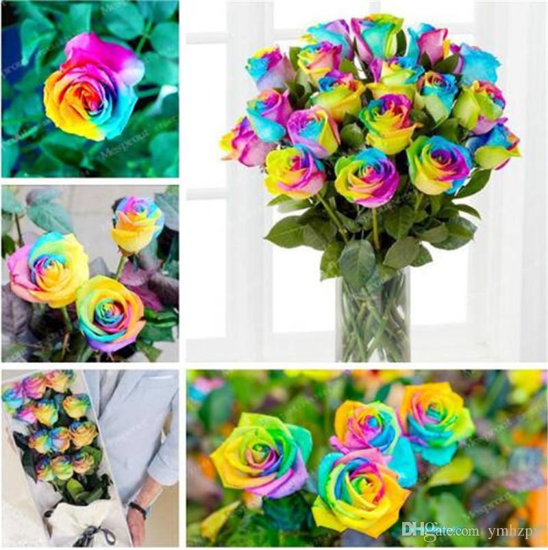 Time-Limit!! 100 Seeds/Lot Rainbow rose seeds, Different Colors Rare Rose, Beautiful rose Bonsai plants for home & garden
