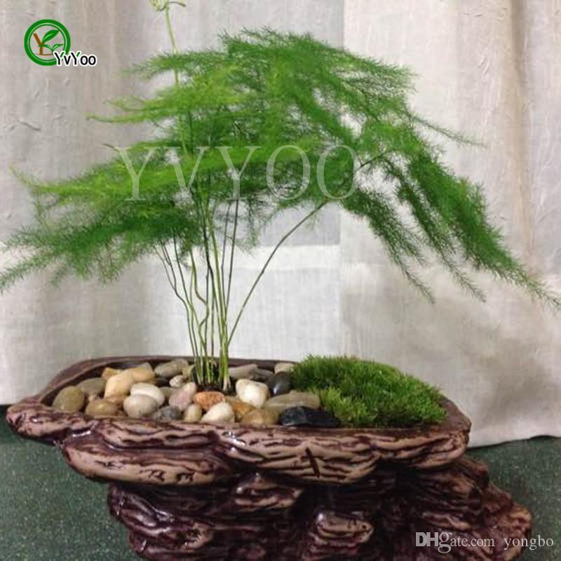 Piante Da Appartamento Bambu.Acquista 30 Semi Di Bambu In Vaso Piante Da Interno Fiori Nuovo