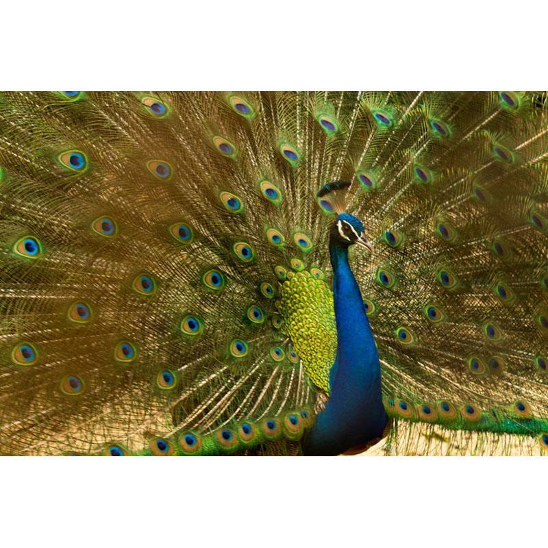 Peacock full screen diamond painting DIY diamond mosaic embroidery gift cross stitch handmade home decoration