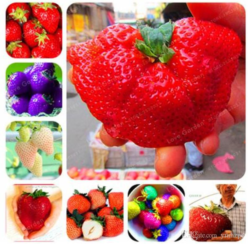 GIANT STRAWBERRY SEEDS ~ Garden Flower Plant Seedlings AUS SHIP