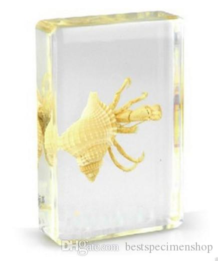 Hermit Crab Specimen Resin Embedded Sea Crab Transparent Mouse Paperweight Block Student New Popular Biology Science Learning&Education Toys