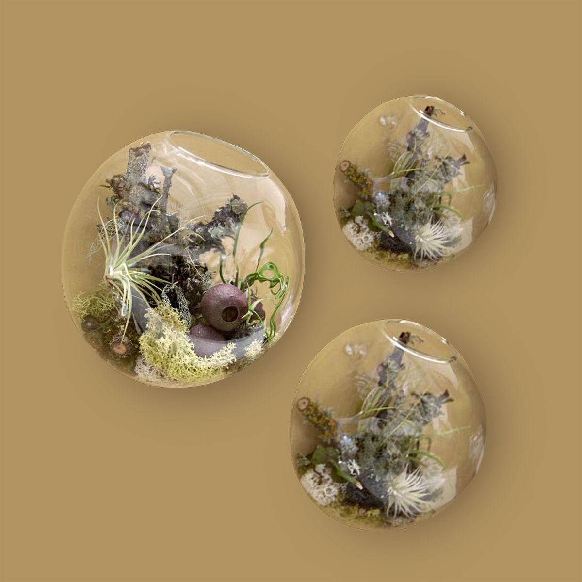 Terrario Per Piante Grasse acquista 3 pz / set bolla terrari parete interna vaso di vetro montaggio a  parete fioriere piante grasse succursali titolari decorazione della parete