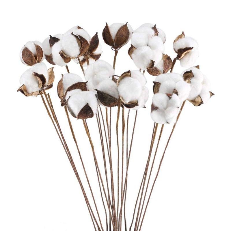 20PCS 24 إنش الطبيعية المجففة الجذعية القطن، زهرة اصطناعية مزرعة حشو الزهور ترتيب الرئيسية الطرف الديكور