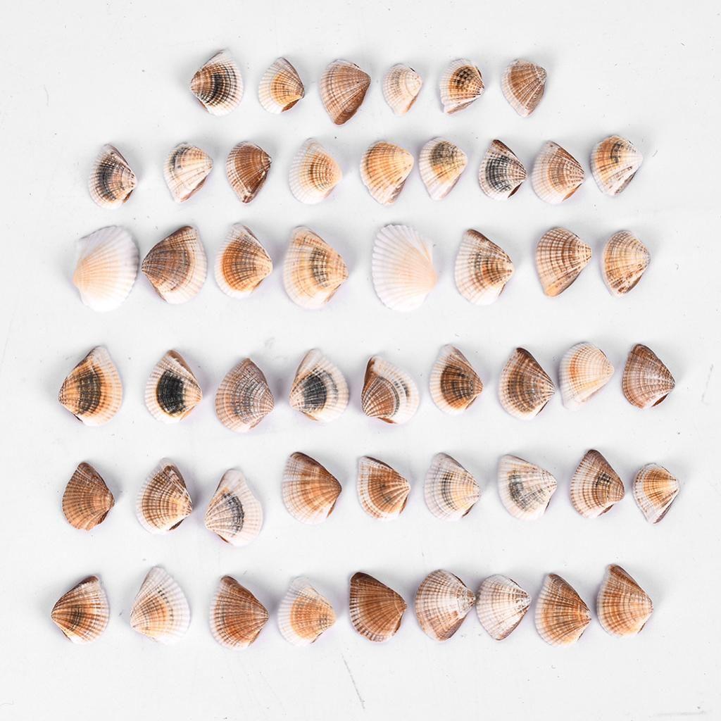 Small Sea Shell Beads Ocean Beach Yellow Spiral Seashells for DIY Craft Charms